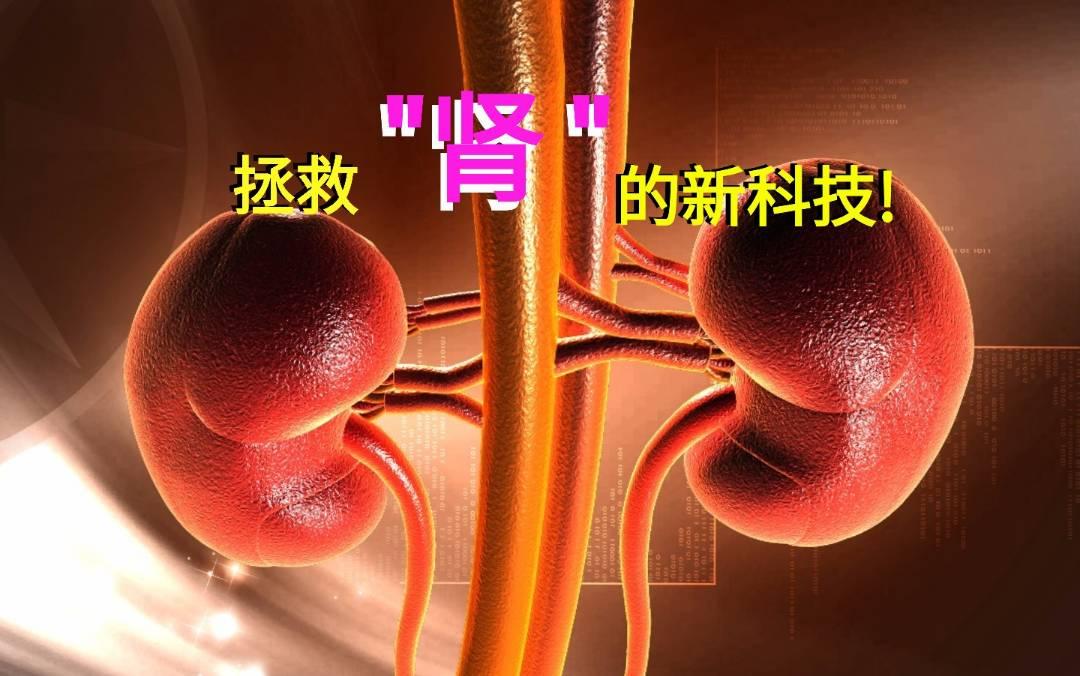 拯救肾的新科技