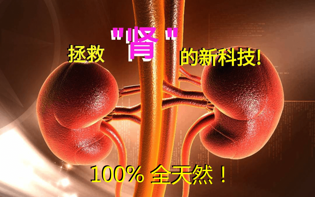 拯救肾衰竭的新科技