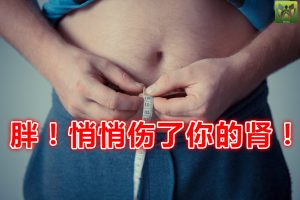 胖!悄悄伤了你的肾!