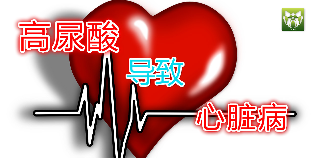 高尿酸导致心脏病!